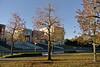 Autumn leaves-湘南藤沢 (ogawa san) Tags: autumnleaves keiouniversity 慶應義塾大学 紅葉 秋 shonanfujisawacampus 湘南藤沢キャンパス