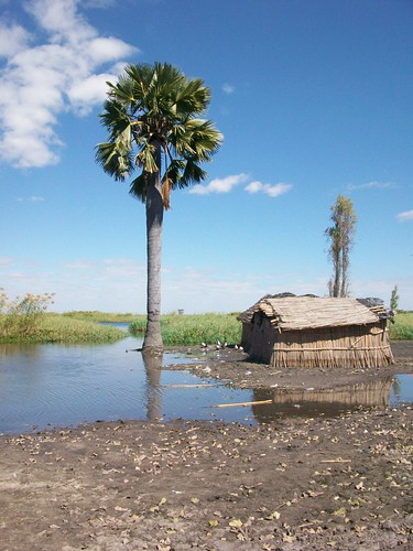 Flood plain in Kafue Flats, Zambia. Photo by Saskia Husken, 2010.