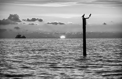 Home to Port (Julian@Hove) Tags: sunset sea blackandwhite seascape cormorants brighton southcoast southwick britishseascapes