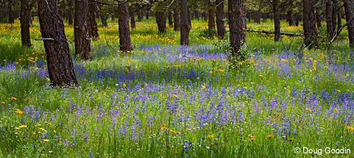 Photo - Doudy Meadow