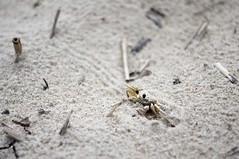 don't get crabs (Matthew_Abel) Tags: beach delete10 delete9 mom delete5 delete2 susan delete6 delete7 delete8 delete3 delete delete4 save va don deletedbythehotbox