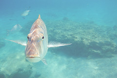 Hello you.. (RomImage) Tags: sea fish japan nikon asia underwater tropical tropic okinawa seashore tropics seawater aw100