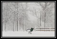 51/52-2012 ~ Blizzard Beauty (DinsPhoto) Tags: snow snowstorm blizzard 2012 week51 weekofdecember16 522012 52weeksthe2012edition