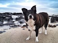27-12-2012 (Copperhobnob) Tags: sea beach coast sand samsung splash stcombs