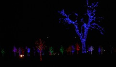 Love the blue tree (Tessie's Photos) Tags: christmas vitruvianpark