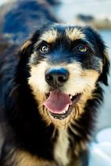 Lucy (Sabrus Sooz) Tags: dog pet 50mm lucy perro mascota