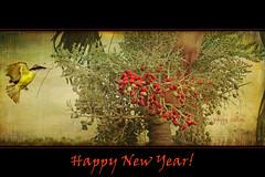 Happy New Year! (Peggy Collins) Tags: bird costarica textured tapestry happynewyear nesting birdinflight kiskadee osapeninsula yellowbird greatkiskadee birdflying nestingbird christmaspalm peggycollins