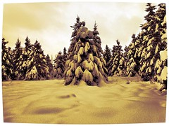 Circle of trees (Guaranteed(79)) Tags: trees sky white snow canada cold green landscape january evergreen me2youphotographylevel2 me2youphotographylevel3 me2youphotographylevel1 me2youphotographylevel4
