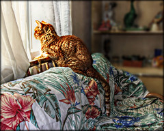 2012 In Retrospect (Chris C. Crowley) Tags: window cat feline kitty sofa tigger chriscrowley celticsong22 tiggerathome 2012inretrospect tiggerslastdays