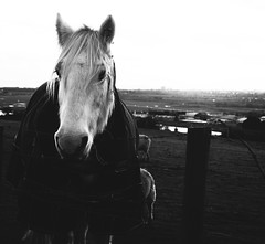 365 Project / Day 1. (aimz_durrant) Tags: blackandwhite bw horse oneaday animals project photography sony photoaday 365 slt pictureaday a35 365daysproject 365project sonyslta35 sonya35
