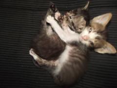 DSCF0820 (letsbee) Tags: cats cute little alien awn
