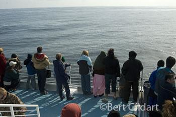 whale watchers silent with anticipation