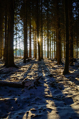 Sun through a dark winter forest (Fredde Nilsson) Tags: winter shadow sun snow tree pine forest dark skne flare skrylle