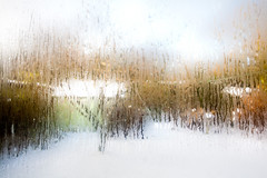 Through The Frosty Window (juliereynoldsphotography) Tags: elementsorganizer