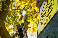 Barbed fire (Jawad Q) Tags: autumn fall yellow danger bokeh fallcolors web sheffield autumncolou