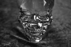 Crystal Skull (Sharon Dow - Arm Op 16th May = No Photography :'-() Tags: life blackandwhite canada skull blackwhite bottle still cabin nikon crystal drink head canadian alcohol vodka crystalskull ourbackgarden 2013 crystalheadvodka crystalhead d3100 sharondowphotography sharondow