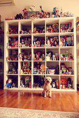 welcome to our new dolly room (girl enchanted) Tags: red dog white ikea vintage puppy toy toys starwars dolls bears disney shelf collection 80s poodle totoro ghibli blythe doggy barbies pup mattel collectibles timburton steiff dollies toyroom shortcake poochie starwberry expedit blythes dollyroom