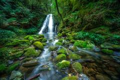 Cascades (John A Hunt Photography) Tags: waterfall sony au australia nsw newsouthwales ebor comara visitnsw