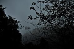 DSC_0010 Go into Mist (tsuping.liu) Tags: outdoor mountain mist landscape sky serene shilhouette nature naturesfinest natureselegantshots night deptoffield