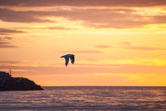 Colors of Iceland (E.Clerc) Tags: iceland bird flight ocean colours red pink sunset cold animal wild marine nature landscape beautiful
