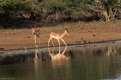 Peace (My Pixelated life) Tags: krugerpark