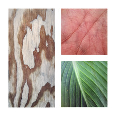 236 | 366 | V (Randomographer) Tags: project366 organic pattern texture wood flesh leaf plant lines conceptual graphic design 236 366 panels