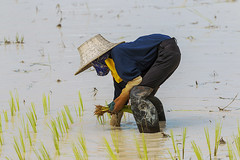 ChiangRai_2691 (JCS75) Tags: asia asie thailand thailande canon chiangrai