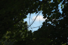 portal to heaven (Dotsy McCurly) Tags: portal heaven trees sky clouds nature beautiful dof nikon d750 nj