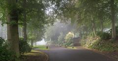 Beaumont Park In The Mist (RD400e) Tags: canon eos 5d mk3 ef 2470l f28 bwpolariser gitzo trees mist beaumont park huddersfield
