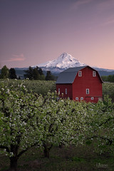 Spring Blossoms (jpeder55) Tags: mthood sunset barn blossoms hoodriver landscape orchard scenic spring trees fujifilm xt1