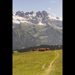Cows & Dents (JoshJackson84) Tags: canon60d sigma18250mm europe france rhonealps portesdusoleil savoie hautesavoie switzerland morgins dentsdumidi mountain alps alpine mountains cows vertical
