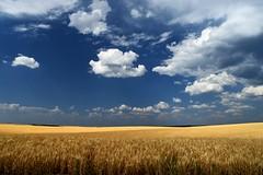 IMG_20160816_201127 (joshcheckers) Tags: field farm tetons tetonvalley wheat farmer clouds bluesky sunlight outdoors outside hills rollinghills idaho wyoming hay