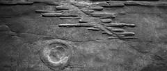 textures (ffoster) Tags: pointloma sandiego ocean pacific beach rockformation blackandwhite sigmaquattrodp0 frankfoster