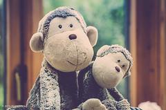 240 ~ 366 (BGDL) Tags: afnikkor70300mm1456g nikond7000 bgdl goingfor4inarow~366 lightroomcc softtoys monkeys matty daddymatty