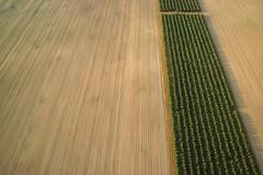 Our Daily Bread (preze) Tags: field feld ernte ballonfahrt balloonflight luftfahrt luftbild aerialimage aerialphoto abgeerntet harvested agrarwirtschaft agribusiness agrarianeconomy abstrakt abstract brandenburg germany landwirtschaft agriculture farming