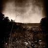 Noir (Claudio Taras) Tags: 6x6 claudio contrasto taras rolleiflex35f rodinal rollfilm sardegna landscape bw bokeh biancoenero monocromo monochrom toned