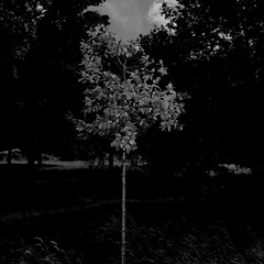 TERRA INCOGNITA (Grant Simon Rogers) Tags: grantsimonrogers  fujifilmx100t flasher flashefx20 flashing flneur fujiflasher flnerie thefirst10000 terraincognita brockwellpark brixton williamblake billyblake englandshire littleengland bw blackwhite effrafc animamundi individuation themanwhoflashedattrees themanwhoflashedinthegrass southlondon londinium therepublicofheaven dassingendeklingendebumchen photopsychotherapy