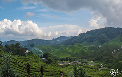 DSC_0072 (Dinesh Parate) Tags: scenic beauty landscape teaplantation hill station sky blue greenery mountains nature