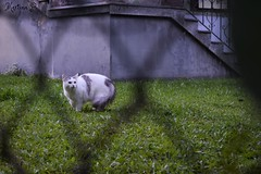 OMG its HFF again! (martinap.1) Tags: cat hff happy fence friday fenced katze zaun