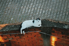 Cat (CookieSiouxsie) Tags: cat canon 50mmlens vsco vscobrasil vscocam nature