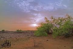 (Ibrahim Hamaty) Tags:  jizan saudiphotography saudiarabia        sunset