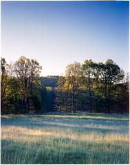 Hallamlla 4x5 - Kodak Ektar (magnus.joensson) Tags: hallamlla spring sweden swedish sterlen green 4x5 linhof technikardan 45 fujinon 125mm cmw kodak ektar 100 c41 epson v800