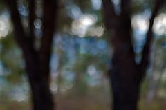 Le Parc Naturel Forestier de la Croix des Gardes - Cannes 0.1 (bresciano.carla) Tags: naturalmente pentaxart pentaxk500 trioplan100mm manuallens vintage bokeh cannes