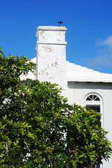 aGilHDSC_4334 (ShootsNikon) Tags: bermuda ocean atlantic subtropical beaches nature colorful island paradise