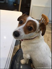 Wed, Sep 28th, 2016 Lost Female Dog - Feltrim Rd, Swords, Dublin (Lost and Found Pets Ireland) Tags: lostdogfeltrimrddublin lost dog feltrim rd dublin september 2016