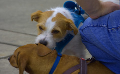 Sniff (swong95765) Tags: dogs sniff introduction leash meeting interested smell greet greeting canine animal