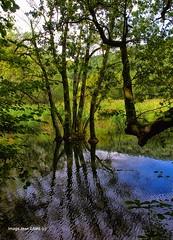 Bain de pieds pour les arbres de l'tang (jean_game) Tags: extrieur nature tang arbres reflets eaucontraste findejourne couleurs
