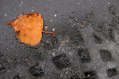 Shoe Print And Leaf (Arthur Koek) Tags: leaf pavement thenetherlands asphalt harderwijk veluwe meltingsnow gelderland shoeprint
