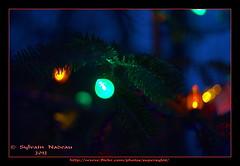Vert... Green (Supersyl08) Tags: christmastree christmaslights christmasdecorations sapindenol dcorationsdenol lumiresdenol