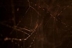 warwick7 (Emma McNally1) Tags: blur chalk focus time space archive surface warwick residency blackboard topology figureground chinaplate thisistomorrow warwickmathsinstitute christopherzeeman warwickmathshouse
